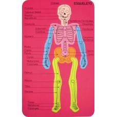 Cuerpo Humano Goma Eva Sistema Oseo